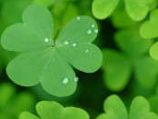 Happy_StPatricks_Day2014_freecomputerdesktopwallpaper_1680